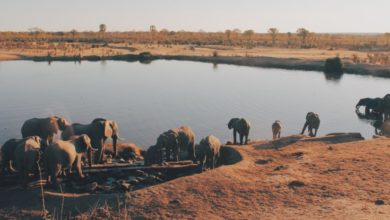 Photo of Lawyers try to stop Chinese coal mine in Hwange game park