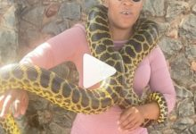 Photo of Zodwa Wabantu shows off her giant snake (VIDEO)